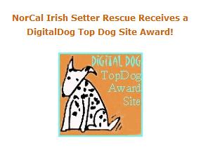 dog-site-award